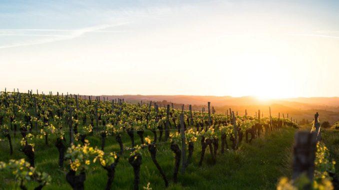 Vin blanc Chablis