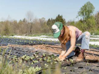 job agroalimentaire