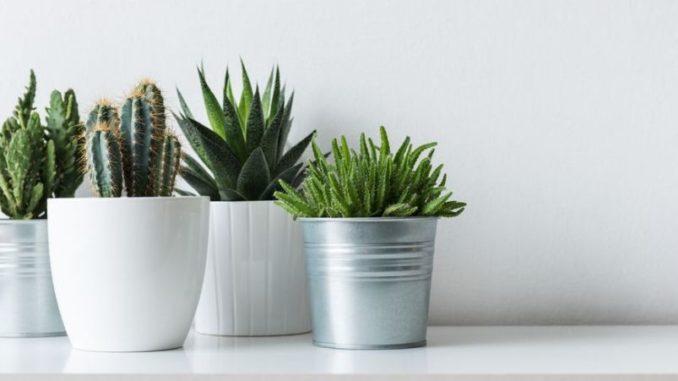 plantes artificielles d'intérieur